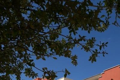 Orhangazi Anadolu Lisesi Fotoğrafları 5