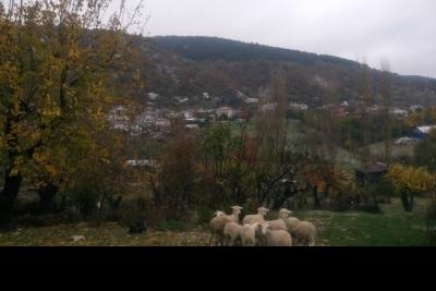Ortaköy Orhan Öcalgiray Ortaokulu Fotoğrafları 2